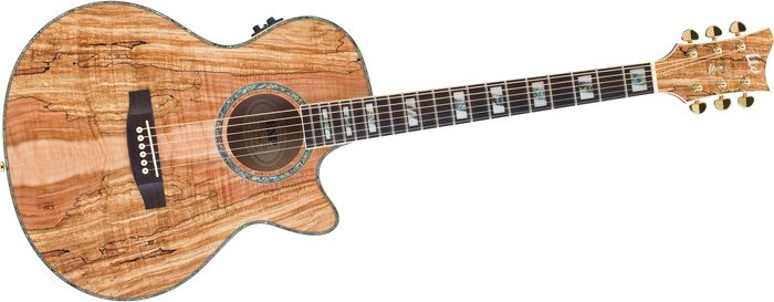 Spalted Maple Guitar Ibanez Guitar Spalted Maple